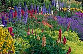 Colorful perennial flowerbed in early summer lupinus, delphinium, alchemilla, geranium