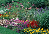 Summer flowerbed with Tagetes, Petunia, Salvia, Cleome, Begonia semperflorens