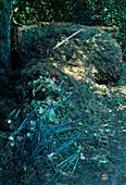 Garden waste, grass clippings and leaves on compost