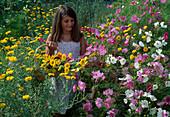 Girl picking summer flowers, Cosmos, Anthemis
