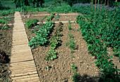 Development of a vegetable garden, July