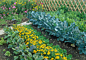 Mixed culture with broccoli, tagetes, lettuce and beetroot
