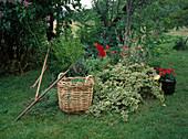 Lawn practice, lawn cutting in wicker basket, hoe, rake, krail