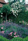 Flower bed with Rosa 'Mozart', 'Ghislaine de Feligonde', Nepeta