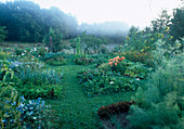 Vegetable garden in the morning mist, paths with clover