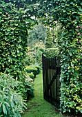 Garden gate through Fagus hedge (beech)