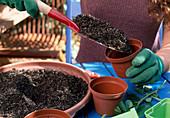 Stecklingsvermehrung von Rosen 2. Step: Topf mit Gemisch aus Erde und Sand füllen 2/7