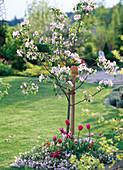 Malus (apple tree)