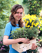 Young woman with Salvia 'Icterina' (golden sage)