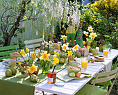 Breakfast table with Narcissus (Daffodil)