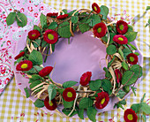 Bellis and hornbeam wreath