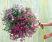 Pour hanging basket with watering rod