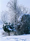 Garden corner with snow
