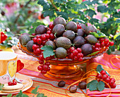 Ribes (red currant, gooseberry)