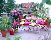 Dachterrasse mit Rhododendron