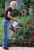 Watering the flowerbed