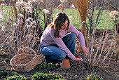 Young woman cutting back plants in the flower bed