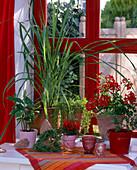 Windowsill with herbs