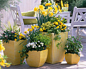Erysimum 'Devon Sunset' and 'Dwarf' Gold Lacquer, Narcissus Daffodils, Euphorbia