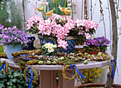 Rhododendron simsii (room azalea), Campanula (bellflower)