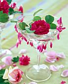 Pink 'Rose De Rescht' (scented rose)