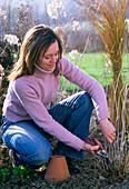 Young woman cutting Hydrangea arborescens (shrub hydrangea)