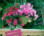 Plant green hanging basket