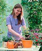 Plant the orange potato pot