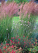 Molinia arundinacea 'Karl Förster' (giant whistle grass)