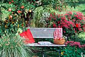 Bench in the garden under apple tree 'James Grieve'