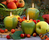 Apple candles with malus (apple and ornamental apple)