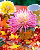 Dahlia (pink and white cactus dahlia)