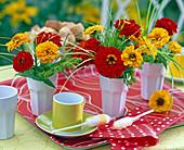 Zinnia (yellow and red zinnia)
