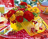 Yellow and red Zinnia (zinnia)
