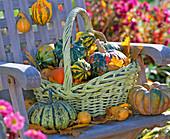 Basket with cucurbita (pumpkin) on wooden chair