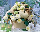 Cucurbita (white pumpkins)