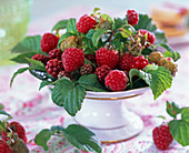 Rubus (raspberry, grape, unripe blackberry)