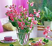 Lathyrus odoratus (pink sweetpea)
