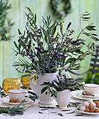 Olea (olive)
