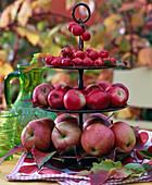 Brown metal shelfs with malus (apple, ornamental apple)