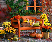 Chrysanthemum, Cucurbita, orange bank, basket, Vitis