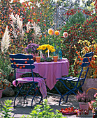 Blue garnish, pink tablecloth, aster, chrysanthemum, calluna