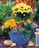 Chrysanthemum (Chrysanthemum), Capsicum annuum (Ornamental Paprika)