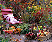 Baskets with cydonia (apple quince), malus (apple) in front of Autumn bed