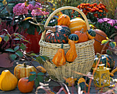 Yellow wicker basket with handle, filled with cucurbita (ornamental squash)