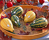 Cucurbita (ornamental squash) as mice, with pumpkin seeds as eyes
