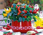 Capsicum annuum (ornamental paprika) in a saucepan as a table decoration