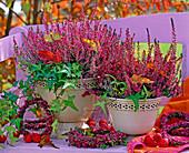Calluna Garden Girls 'Marlies', 'Aphrodite'