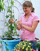Plant light blue flower bulbs