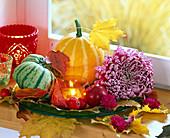 Cucurbita (pumpkin), Chrysanthemum (crysanthemum), Malus (apple)